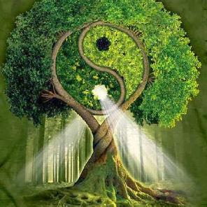 4 passi con l'Ecopsicologia